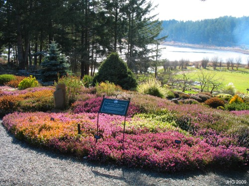 Heather Garden At Glendale Garden
