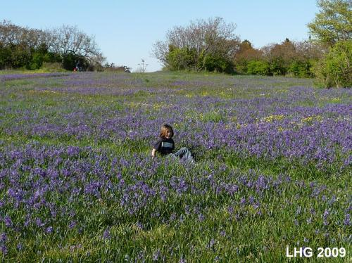 My Nephew Owen in the Camas Harvest Fields at Beacon Hill Park.