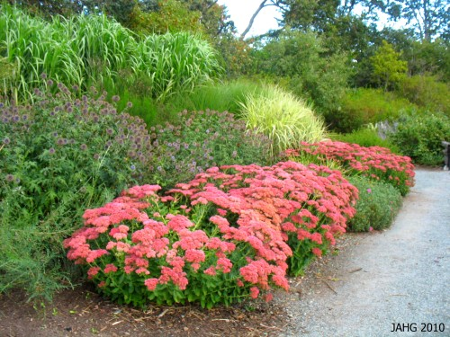 The same border at Finnerty Gardens with 'Autumn Joy' Sedum in bloom.
