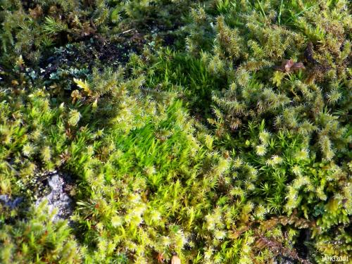 Many Mosses co-exist peacefully close together and with other plants.