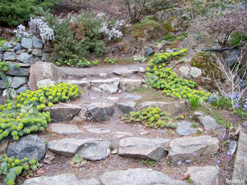 The rock staircase in the Terrace Gardens at Governemnt House is a perfect place to display Euphorbia myrsinites.